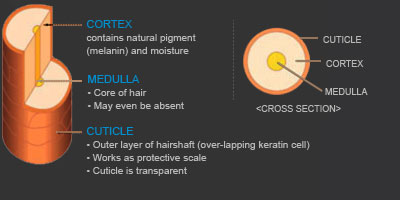 Hair_Structure